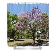 Spring Magnolia In Winter Park  Shower Curtain