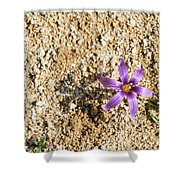Spring Sand Crocus Flower Shower Curtain