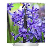 Spring Time With Blooming Hyacinth Flowers In A Garden Shower Curtain