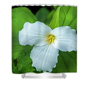 Spring Trillium Shower Curtain