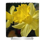 Spring Yellow Shower Curtain