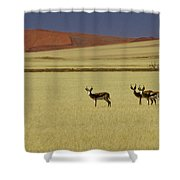 Springbok At Sossusvlei Shower Curtain