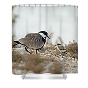 Spur-winged Lapwing Vanellus Spinosus Shower Curtain