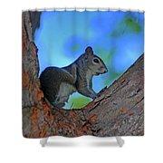 1- Squirrel Shower Curtain
