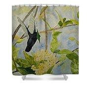 St. Lucian Hummingbird Shower Curtain
