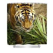 Stalking Tiger Shower Curtain