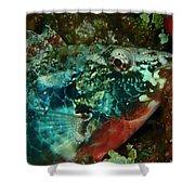 Stop Light Parrot Fish Shower Curtain