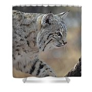 Strolling Bobcat Shower Curtain