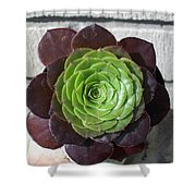 Succulent Rose Shower Curtain