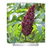 Sumac Fruit Shower Curtain