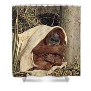 Sumatran Orangutang - Shower Curtain