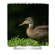 Summer Nature Shower Curtain