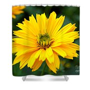 Sun Flower Shower Curtain