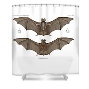 Sundevall's Roundleaf Bat Shower Curtain