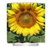 Sunflower 09 Shower Curtain
