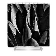 Sunlit Cactus Shower Curtain