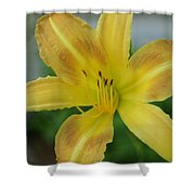 Sunny Start Shower Curtain