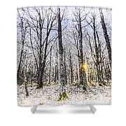Sunrise Snow Forest Art Shower Curtain