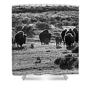 Sunset Bison Stroll Black And White Shower Curtain