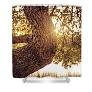 Sunset On A Tree Shower Curtain