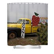 Swanton Berry Farm Davenport Shower Curtain