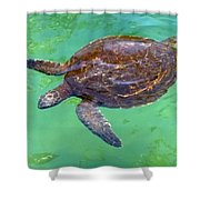 Swimming Along Shower Curtain