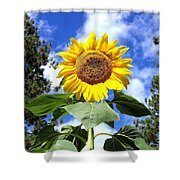 Tall And Sunny Shower Curtain