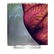 Taro Shower Curtain