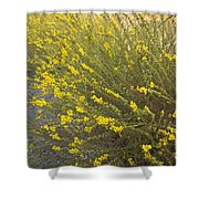 Tarweed Flowering Shower Curtain