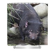 Tasmanian Devil Shower Curtain