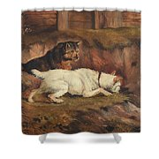 Terriers Ratting Shower Curtain