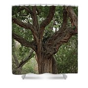Test Of Time Shower Curtain