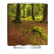 The Ardgartan Forest Shower Curtain