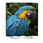 The Blue Shower Curtain