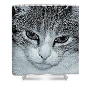 The Cat's Innocense Shower Curtain