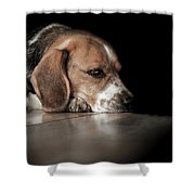 The Day Dreamer Shower Curtain