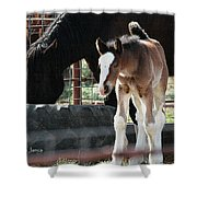 The Flying Colt With The Big White Feet Shower Curtain