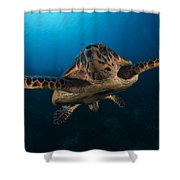 The Hawksbill Sea Turtle, Bonaire Shower Curtain by Terry Moore