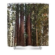The House Group Giant Sequoia Trees Sequoia National Park Shower Curtain