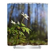 The Morning. Wood Anemone Shower Curtain