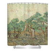 The Olive Orchard, 1889 Shower Curtain