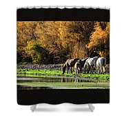 The Salt River Wild Horses  Shower Curtain