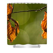 The Secrets Of The Forest Shower Curtain