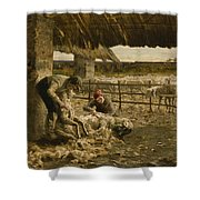 The Sheepshearing Shower Curtain