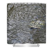 The Swimming Turtle Shower Curtain