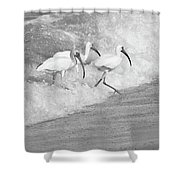 The Tide Of The Ibises Shower Curtain