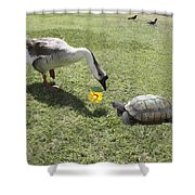 The Turtle And The Goose Shower Curtain