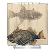 The Zoology Of Captain Shower Curtain