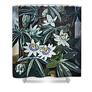 Thornton: Passion-flower Shower Curtain