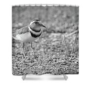 Three Banded Plover Shower Curtain
